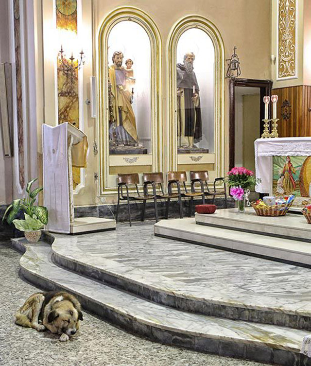 01-ciccio-dog-church