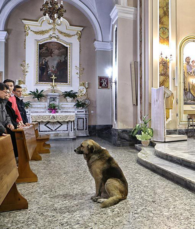 02-ciccio-dog-church