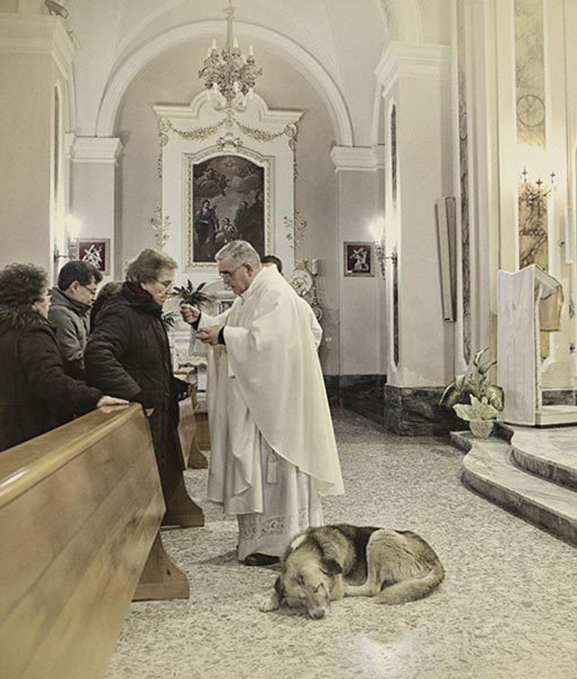 03-ciccio-dog-church