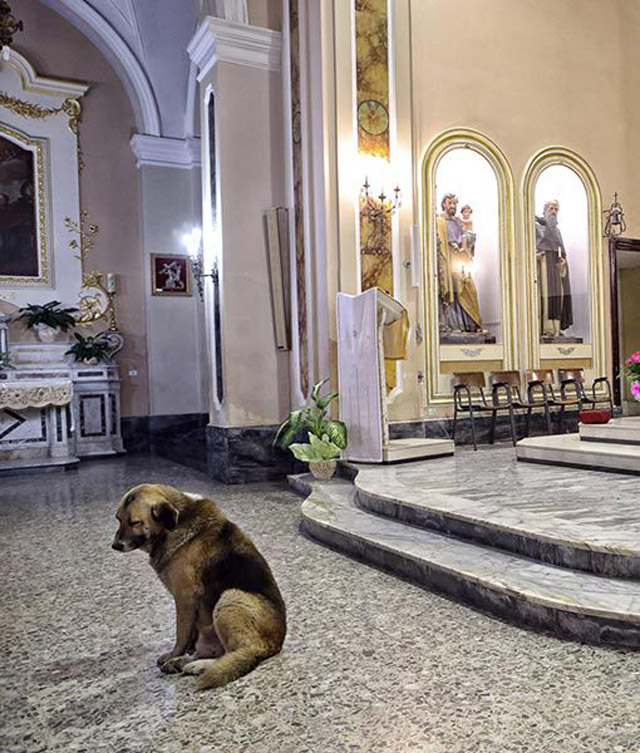04-ciccio-dog-church